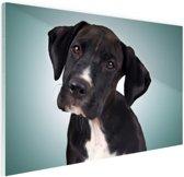 FotoCadeau.nl - Lieve zwart-witte hond Glas 90x60 cm - Foto print op Glas (Plexiglas wanddecoratie)