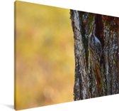 Verscholen taigaboomkruiper op een boomstam Canvas 180x120 cm - Foto print op Canvas schilderij (Wanddecoratie woonkamer / slaapkamer) XXL / Groot formaat!