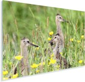 Drie grutto's in het hoge gras Plexiglas 30x20 cm - klein - Foto print op Glas (Plexiglas wanddecoratie)