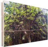 Een kalebasboom of crescentia in een botanische tuin van Rio de Janeiro Vurenhout met planken 60x40 cm - Foto print op Hout (Wanddecoratie)