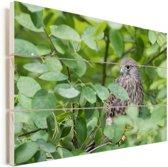 Een boomvalk tussen het groen Vurenhout met planken 90x60 cm - Foto print op Hout (Wanddecoratie)