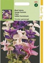 Bladsalvia tricolor - Salvia horminum Tricolor - set van 8 stuks
