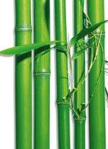 Bamboe Stokken - Fotobehang 183 x 254 cm