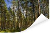 Naaldbos in het Nationaal park Gauja in Letland Poster 120x80 cm - Foto print op Poster (wanddecoratie woonkamer / slaapkamer)