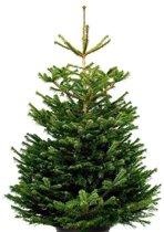 Echte kerstboom Nordmann Excellent 125-150cm