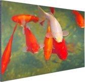 School met grote vissen Aluminium 90x60 cm - Foto print op Aluminium (metaal wanddecoratie)