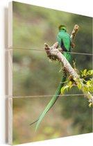 Quetzal rustend op een tak Vurenhout met planken 60x90 cm - Foto print op Hout (Wanddecoratie)