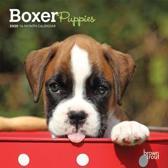 Boxer Puppies 2020 Mini Wall Calendar