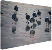 Meeuwen in het water Canvas 60x40 cm - Foto print op Canvas schilderij (Wanddecoratie woonkamer / slaapkamer) / Dieren Canvas Schilderijen