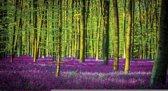 Green | Violet Photomural, wallcovering