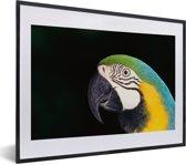 Foto in lijst - Close-up van een blauwkeelara met zwarte achtergrond fotolijst zwart met witte passe-partout klein 40x30 cm - Poster in lijst (Wanddecoratie woonkamer / slaapkamer)