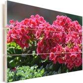 Geranium bloemen in een tuin Vurenhout met planken 30x20 cm - klein - Foto print op Hout (Wanddecoratie)