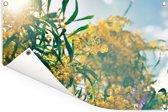 De gele kleuren van de acacia in de zon Tuinposter 90x60 cm - Tuindoek / Buitencanvas / Schilderijen voor buiten (tuin decoratie)