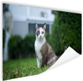 Siamese kat Poster 120x80 cm - Foto print op Poster (wanddecoratie woonkamer / slaapkamer) / Dieren Poster