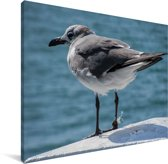 Lachmeeuw aan het water Canvas 160x120 cm - Foto print op Canvas schilderij (Wanddecoratie woonkamer / slaapkamer) XXL / Groot formaat!