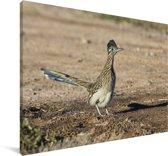 Renkoekoek op een droge vlakte Canvas 30x20 cm - klein - Foto print op Canvas schilderij (Wanddecoratie woonkamer / slaapkamer)
