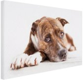 Liggende hond  Canvas 120x80 cm - Foto print op Canvas schilderij (Wanddecoratie woonkamer / slaapkamer) / Dieren Canvas Schilderij