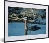 Foto in lijst - Roodhalsfuut zwemt in het blauwe water fotolijst zwart met witte passe-partout klein 40x30 cm - Poster in lijst (Wanddecoratie woonkamer / slaapkamer)