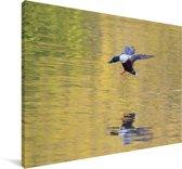 Reflectie van een vliegende slobeend Canvas 60x40 cm - Foto print op Canvas schilderij (Wanddecoratie woonkamer / slaapkamer)