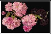 Thea Gouverneur Borduurpakket 512,05 Prunus bloesem - Aida stof zwart 100% katoen