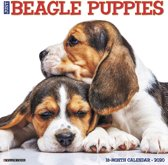 Beagle Puppies Kalender 2020