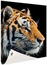 Portret Siberische tijger Tuinposter 80x120 cm - Foto op Tuinposter / Schilderijen voor buiten (tuin decoratie)