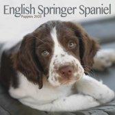 English Springer Spaniel Puppies Mini Square Wall Calendar 2020
