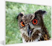 Foto in lijst - Een oehoe met feloranje ogen fotolijst wit 40x30 cm - Poster in lijst (Wanddecoratie woonkamer / slaapkamer)
