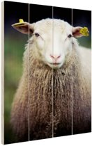 Portret van een schaap Hout 60x80 cm - Foto print op Hout (Wanddecoratie)