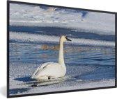 Foto in lijst - Een trompetzwaan zwemt in een winters landschap fotolijst zwart 60x40 cm - Poster in lijst (Wanddecoratie woonkamer / slaapkamer)