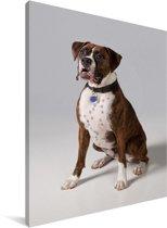 Portret van een prachtige bruine Boxer Canvas 30x40 cm - klein - Foto print op Canvas schilderij (Wanddecoratie woonkamer / slaapkamer) / Huisdieren Canvas Schilderijen