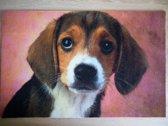 Deurmat 40x60 Beagle Puppy