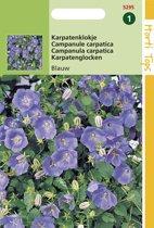 Hortitops Zaden - Campanula Carpatica Blauw
