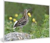 Foto in lijst - Een watersnip op een rots fotolijst wit 60x40 cm - Poster in lijst (Wanddecoratie woonkamer / slaapkamer)