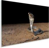 Indische cobra beweegt zich voort in het zand Plexiglas 90x60 cm - Foto print op Glas (Plexiglas wanddecoratie)