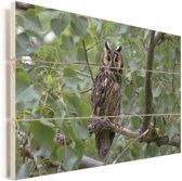 Foto van een ransuil in de bomen Vurenhout met planken 120x80 cm - Foto print op Hout (Wanddecoratie)