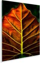 De in herfst gekleurde vertakkingen van de alocasia of araceae Plexiglas 120x160 cm - Foto print op Glas (Plexiglas wanddecoratie) XXL / Groot formaat!