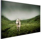 Koe in berggebied Aluminium 90x60 cm - Foto print op Aluminium (metaal wanddecoratie)