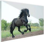 Prachtig zwart paard Glas 120x80 cm - Foto print op Glas (Plexiglas wanddecoratie)