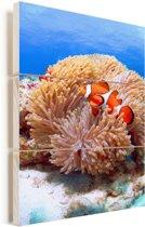 Zijaanzicht van een clown vis zwemmend voor een anemoon bij de Kerama-eilanden Vurenhout met planken 60x90 cm - Foto print op Hout (Wanddecoratie)
