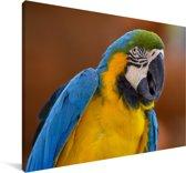 Portret van een kleurrijke blauwkeelara Canvas 90x60 cm - Foto print op Canvas schilderij (Wanddecoratie woonkamer / slaapkamer)