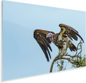 Oorgier klaar om weg te vliegen Plexiglas 90x60 cm - Foto print op Glas (Plexiglas wanddecoratie)