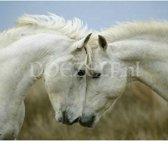 Witte paarden - Diamond Painting 40x50 (Volledige bedekking - Vierkante steentjes)