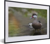 Foto in lijst - Een Bahamapijlstaart in het water fotolijst zwart met witte passe-partout klein 40x30 cm - Poster in lijst (Wanddecoratie woonkamer / slaapkamer)