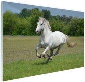 FotoCadeau.nl - Rennend wit paard Glas 60x40 cm - Foto print op Glas (Plexiglas wanddecoratie)