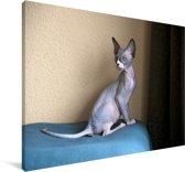 Een zittende Sphynx kitten Canvas 90x60 cm - Foto print op Canvas schilderij (Wanddecoratie woonkamer / slaapkamer) / Huisdieren Canvas Schilderijen