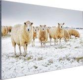 Schapen in een winterlandschap Aluminium 60x40 cm - Foto print op Aluminium (metaal wanddecoratie)