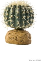 Cylinder Cactus Small