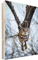 Een vliegende oehoe met bomen op de achtergrond Vurenhout met planken 120x160 cm - Foto print op Hout (Wanddecoratie) XXL / Groot formaat!