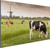 Grazende koeien op een dijk Aluminium 60x40 cm - Foto print op Aluminium (metaal wanddecoratie)